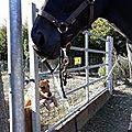 Pucca devant son copaine le cheval