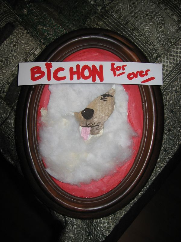bichon for ever