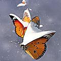 Papillon de neige