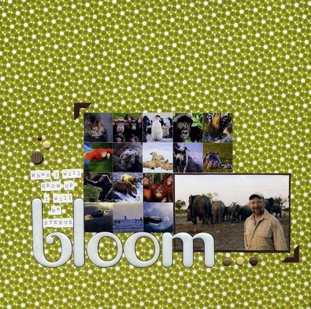 2011_04_18_Steeve_Bloom_800