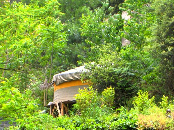 tribu vivace yourte cachée dans les arbres yurtao