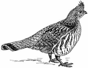 Grouse_(PSF)