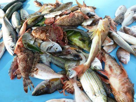 soupe poissons