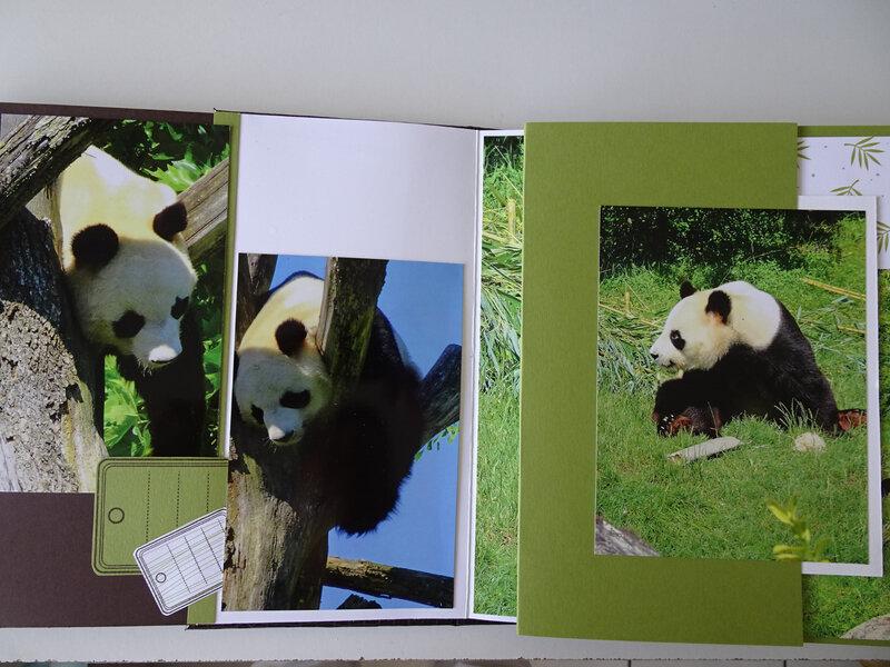 18e MA Panda