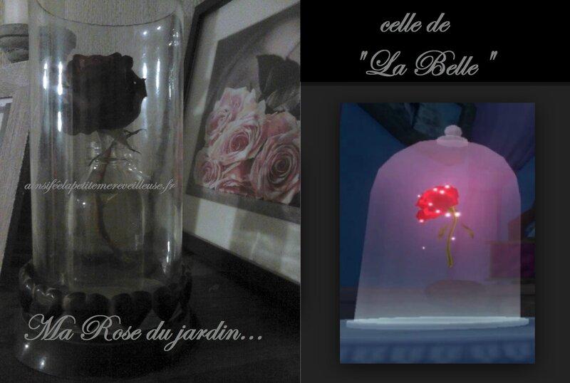 rose de la belle 15 oct 14