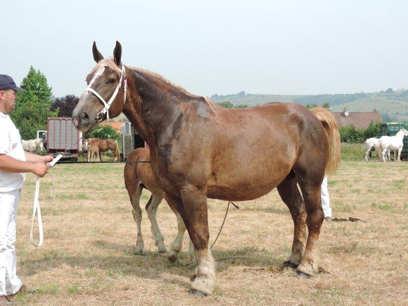 Aprodite - 20 Juin 207 - Concours élevage local - Bonningues les Ardres (62) - 3e (Suitées)