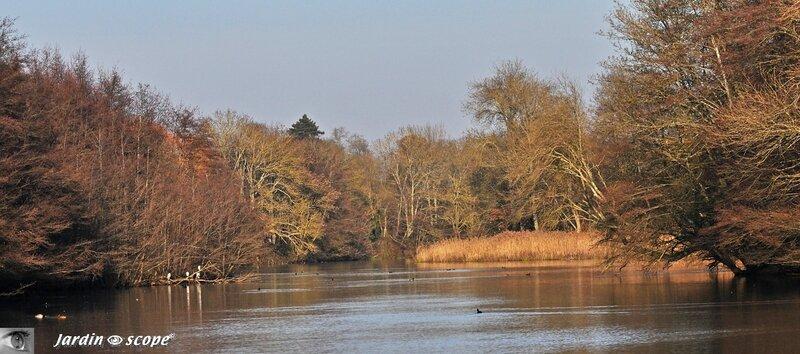 Le Loiret et ses roselières en automne