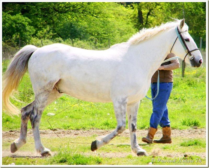 Dressage des chevaux 16