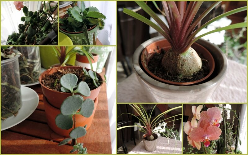 02 Plantes succulentes