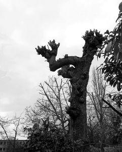 arbre 1