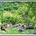 Trou d'eau à salazie (2/3) à la réunion - chanson île maurice - texte : vivre au présent - recette