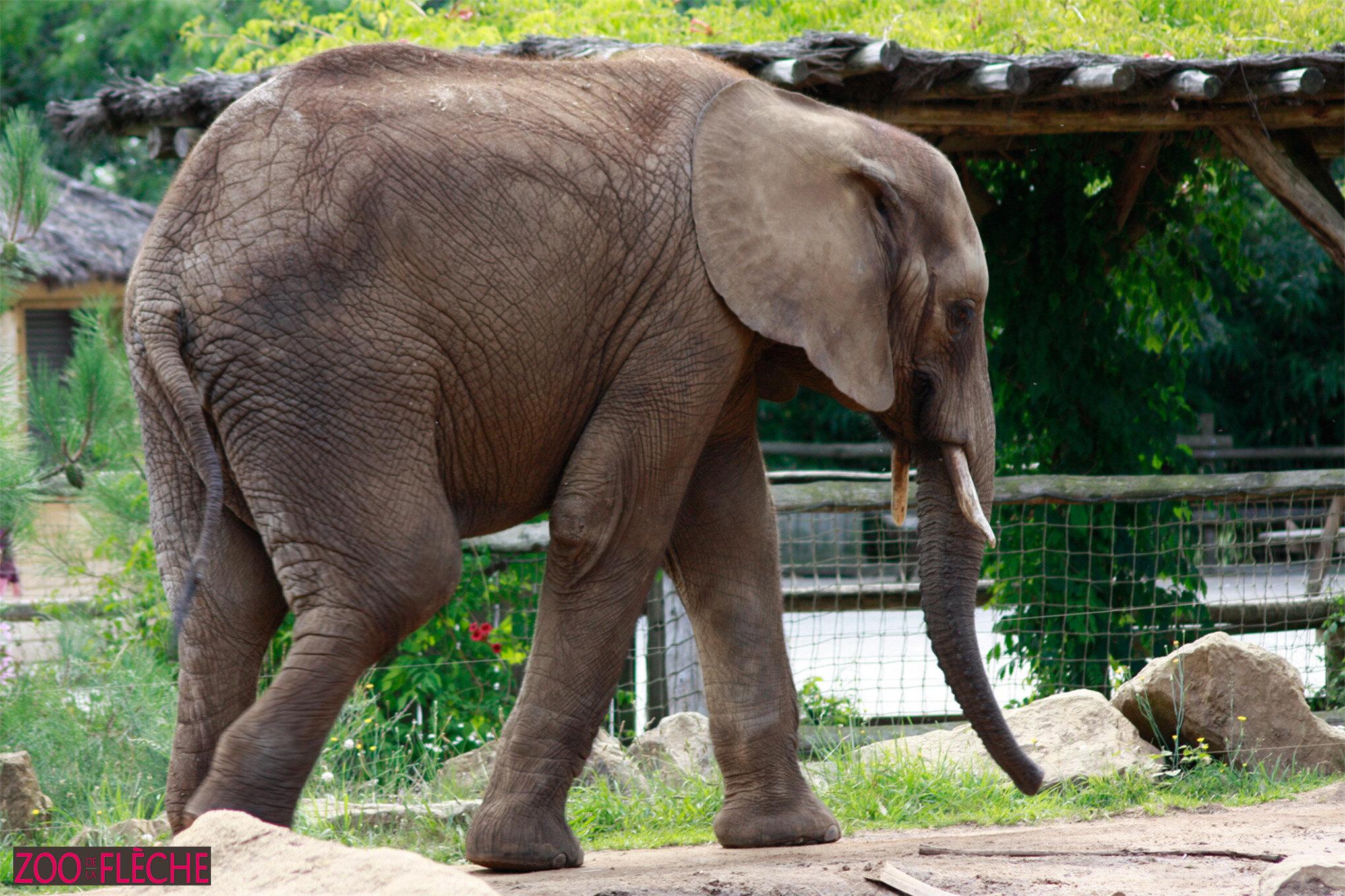 Elephant-(3)HR