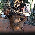 Maitre marabout gogovi grigri specialiste de retour affectif