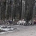 Sortie du loup randonneur à joigny