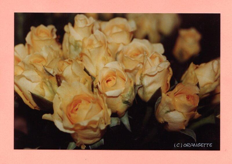 Rose Cappucino