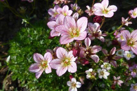 jardin mai 2013 (4)