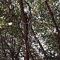 Auprès de mon arbre avec filopattes