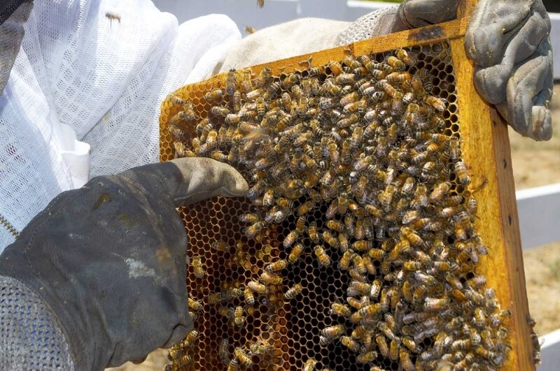 formation-apiculture-debutant