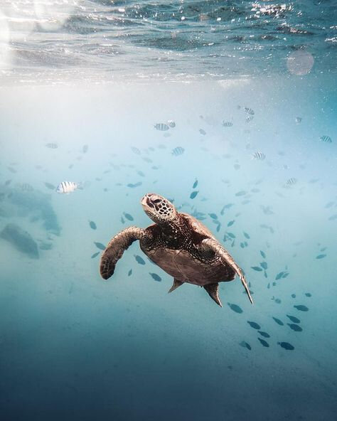 tortue_4