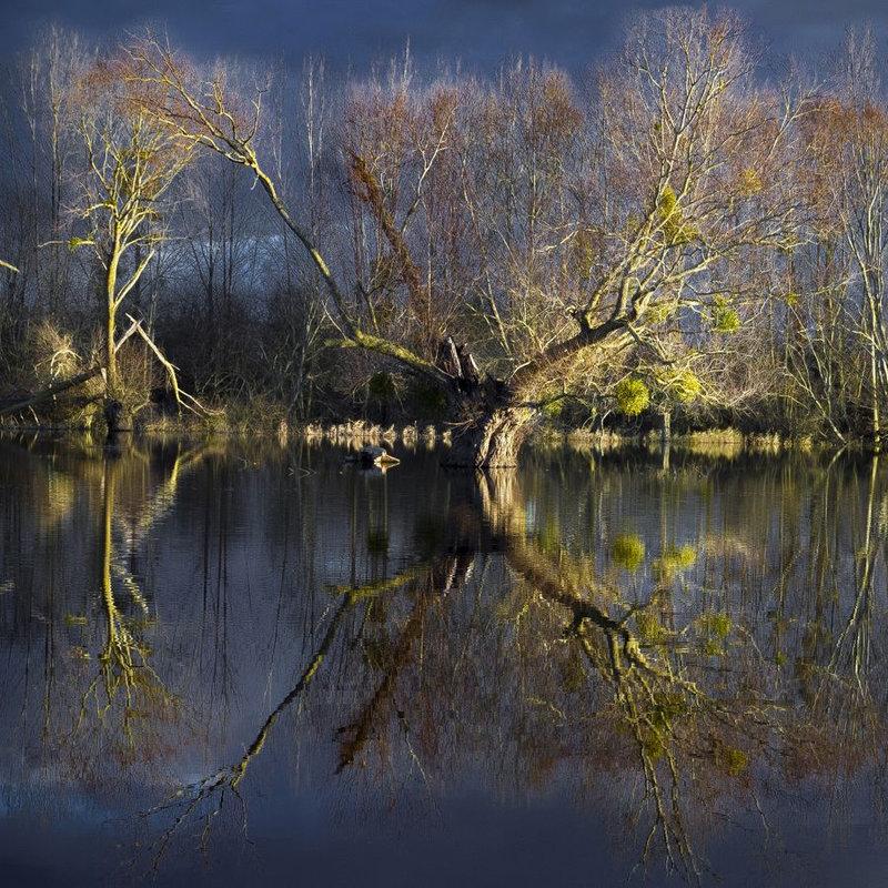 238- Rayon de lumière sur le marais- LE GUILLOU Jean-Yves