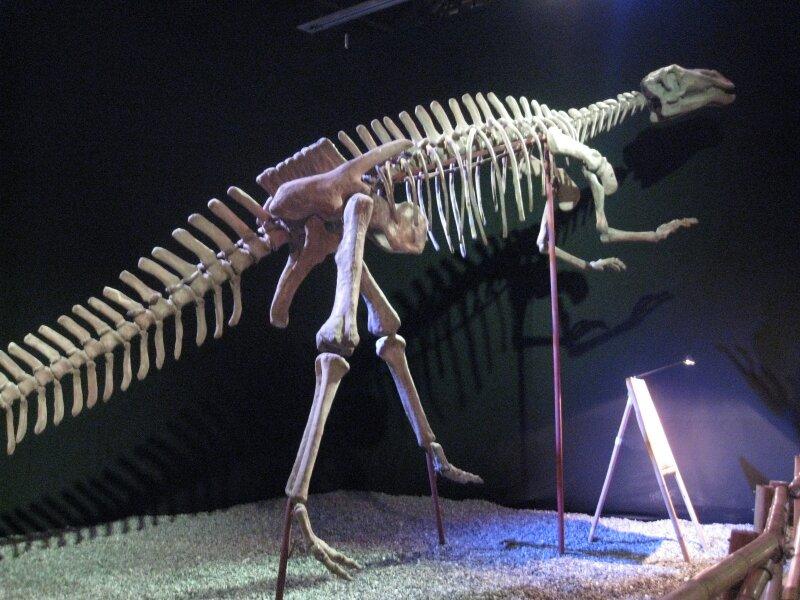 les dinosaures 014