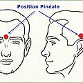 - l'importance de la glande pinéale !