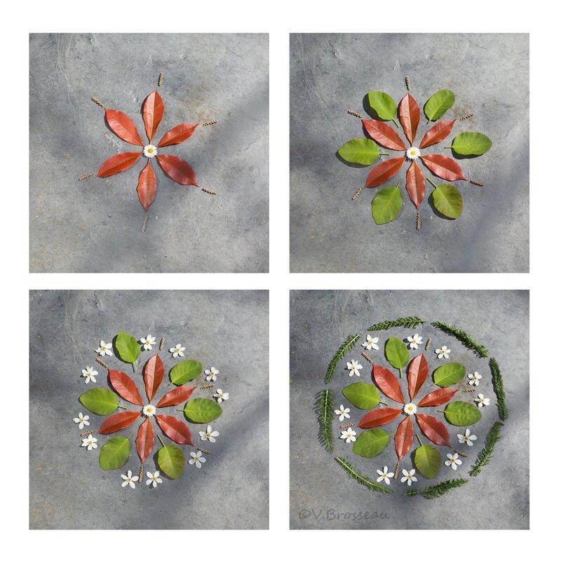 mandala-fleur-évolution-17-08