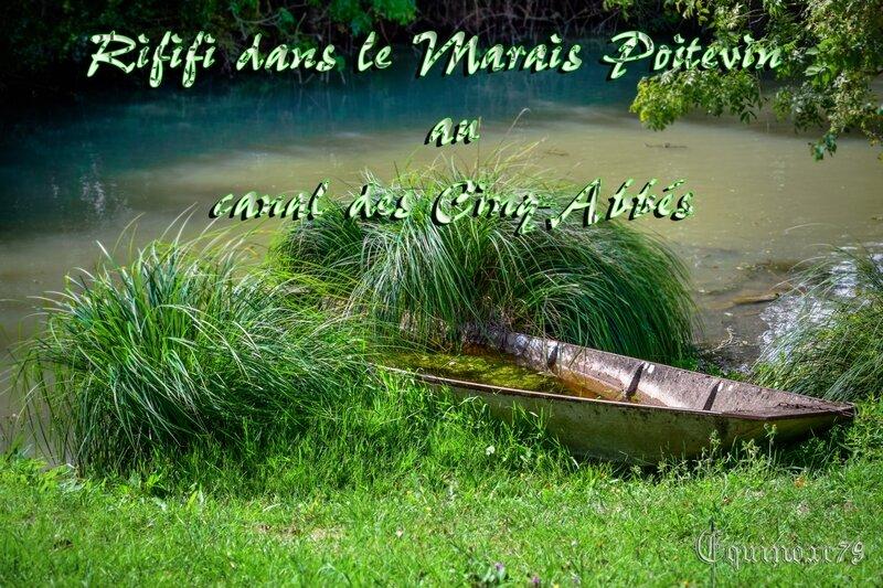 canal des Cinq-Abbés Marais Poitevin entre les religieux de l'Abbaye Maillezais et des habitants de Chaillé-les-Marais, contre les religieux de Notre-Dame de Moreilles