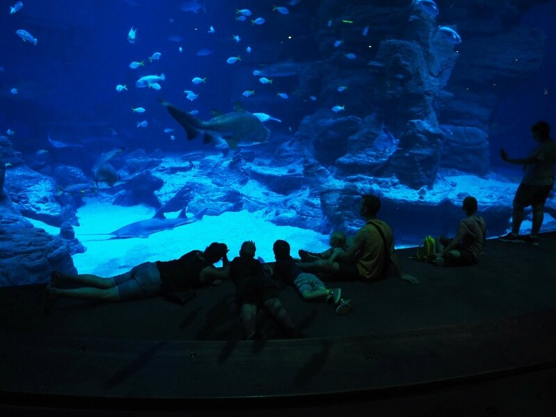 7-aquarium-mare-nostrum-odysseum-montpellier-ma-rue-bric-a-brac