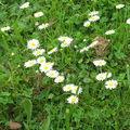 :: un peu de fleurs ! ::