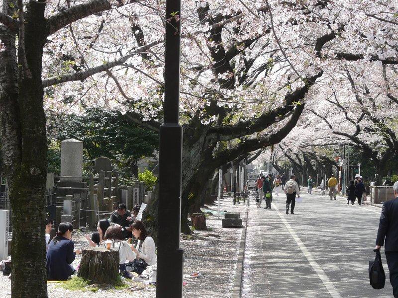 Canalblog Tokyo Cerisier 2010 Yanaka Cimetiere04