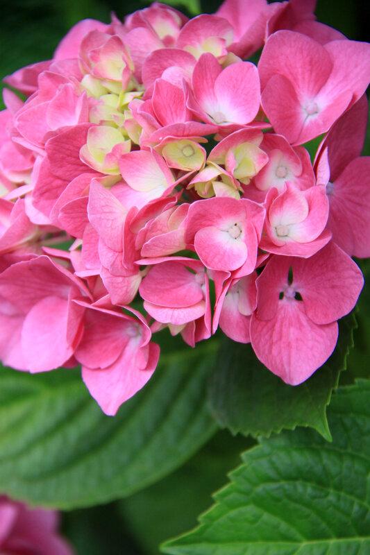 Instants fleuris du jour (37)