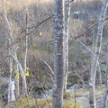 04-10-08 Tromsdalstind et neige (02)