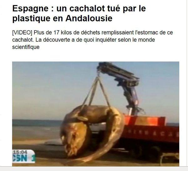 cachalot-tue