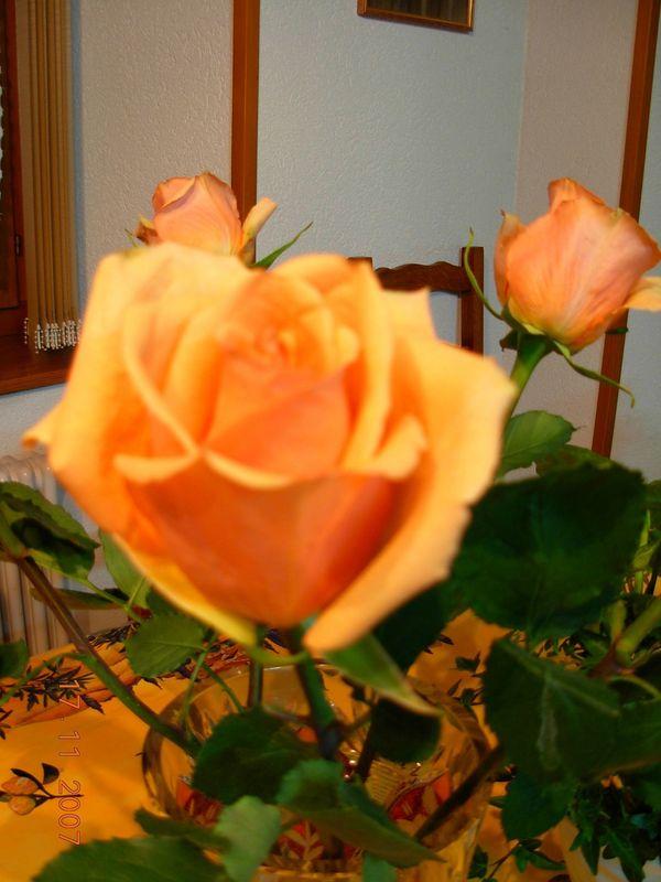 fleurs 17nov 07 001