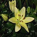 Fiori di primavera - spring flowers - fleurs de printemps - 2