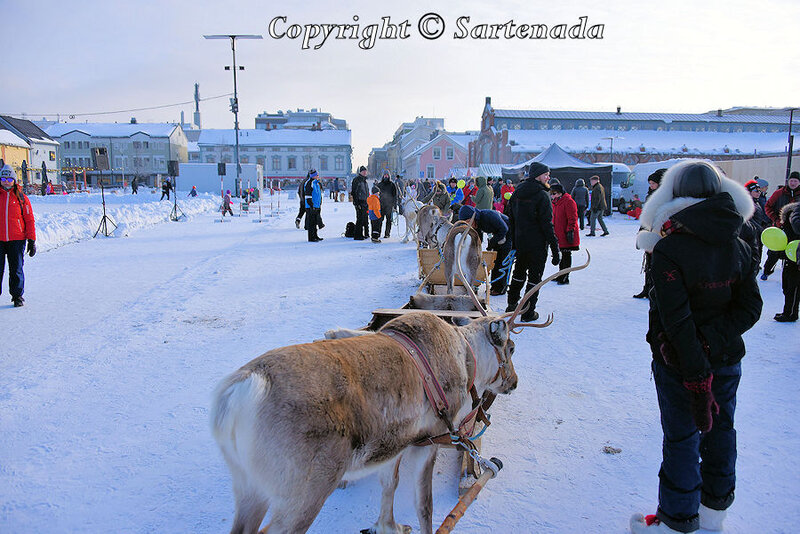 reindeer_rides_for_families_oulu_-1