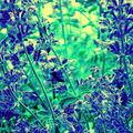 Un appareil-photo, des fleurs, une ou deux