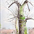 L'arbre fendu