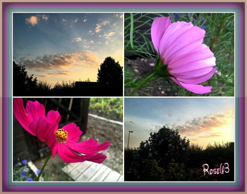 Le soir le ciel et les fleurs Rose63 Juillet 2018