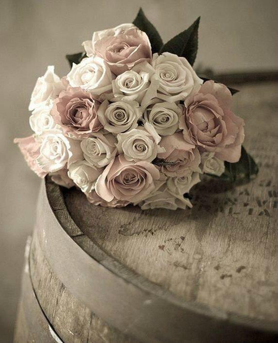 rose _n