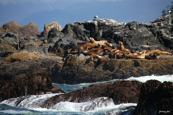 otaries vancouver island
