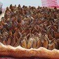 Tarte briochée aux quetsches (hefe gwetsche tart)