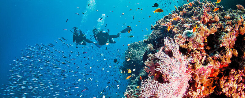 image plongée sous marine
