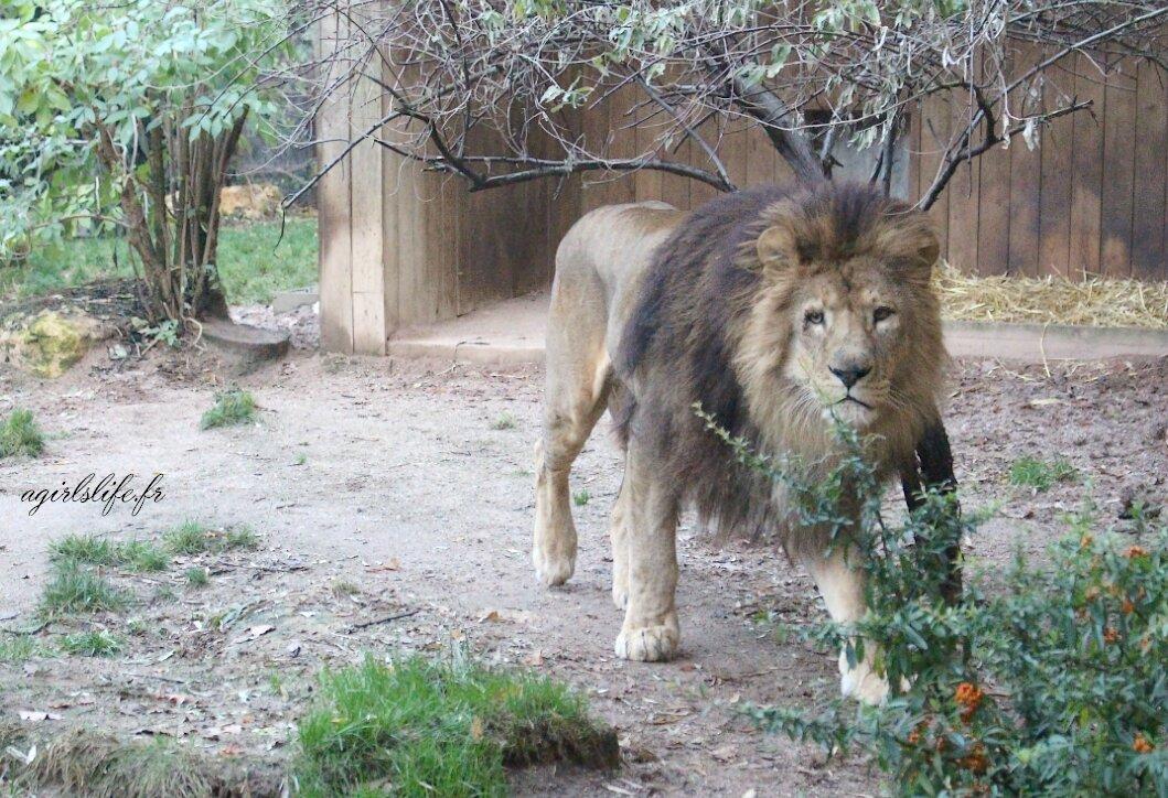 Amneville zoo 25