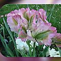 balanicole_2016_05_avril tulipes_40_se délacent