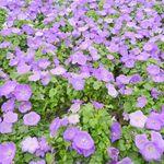 fleurs 26 mars 2013 (51)