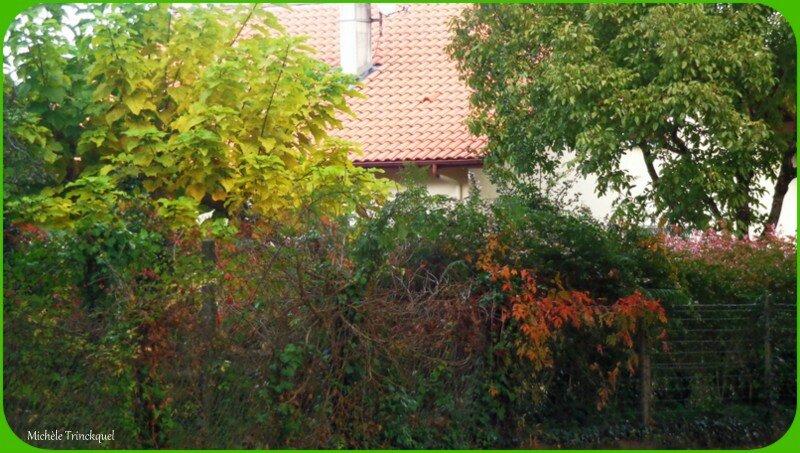 Feuillages automne 0810157