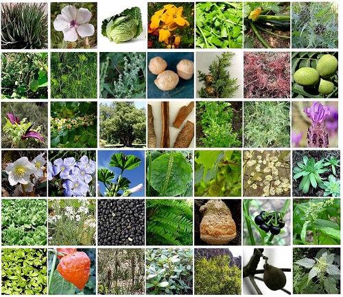 la-guérison-des-maladies-avec-les-plantes-médicales