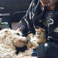 Lally et le chien